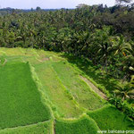 Ubud land for sale