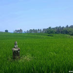 Tabanan land for sale. 30 are land for sale