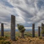 Arboles como Arqueologia, Piraces, Los Monegros