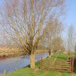 Le canal Vire et Taute en direction de la maison des Ormes