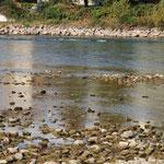 Nidrigwasserstand bei der Badi in Zurzach