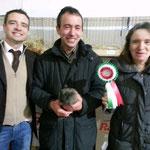 Migliore di razza Sheltie cinnamonagouti solid Topazio proprietario e allevatore Davide Beretta