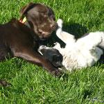 Im Oktober 2011 nach Fenneks Ankunft lief der kleine Max noch auf und davon. Heute sind die beiden beste Freunde