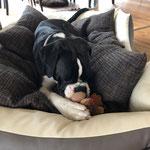 mein neuer Freund der Teddy