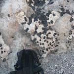 Typischer Pegmatit mit sehr grossen Turmalinen, Cahuilla Mountains, Riverside County, CA