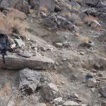 Eine erste Fundstelle am Crystal Ridge, Inyo Mts., CA