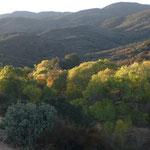 Dicht mit Chaparall bewachsenes Fundgebiet, Cahuilla Mountains, Riverside County, CA