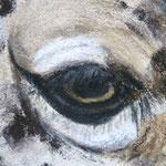 Auge Pastell 1 (c)D.Saul 2013
