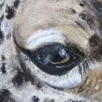 Auge Pastell 2 (c)D.Saul 2013