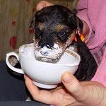 первые попытки кушать самой )))
