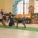 CACIB, BOB, Чемпион Казахстана, СКК, Караганда, 2013