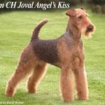 бабушка по папе Joval Angel's Kiss
