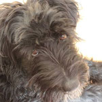 Zoey (Lara)