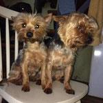 Gonzo und Sophie