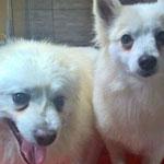 Chello und Chilla