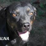 Malna