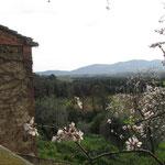 Весна в Тоскане