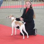 Exposition de Limoges le 13 Avril 2013