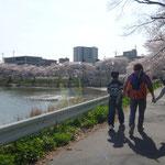 大堤池の桜を見ながら散歩です。
