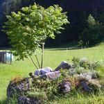 Hier wird ein Alpengarten entstehen