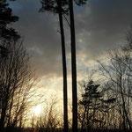 Nadmorski las sosnowy w Ustce w barwach zachodu słońca.