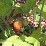 Tomaten ernsten. Schnelle Tomatensuppe von Frau Käferin