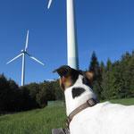 Windpark Ettenheim