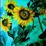 "Sunflower Blooms (1998). Watercolor and Ink, 24"" x 36"". Nicole Harper ©"