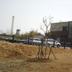 風車とレストランを背景に撮りました