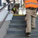 rauf auf´n Bahnsteig - Nala kennt den Weg