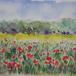 Paysages blés coquelicots PAY005 - en reproduction -