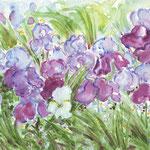 Jardin d'iris à Sarlat (vendu) Vente repro- 16 €- réf FL002