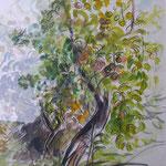 Pommier - aquarelle 50X40cm (vendu) (pas de reproduction)