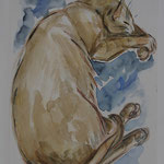 Chat aquarelle CHaq001