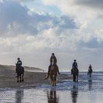 'Paarden op het Noordzeestrand Vlieland'