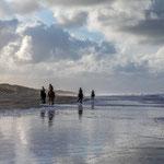 'Paarden op Noordzeestrand Vlieland' nov 2020