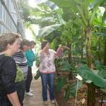 Gewächshaus: Tropische Pflanzen