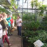 Gewächshaus:Subtropische Nutzpflanzen
