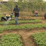 Die Seminaristen sorgen mit dem Gemüsegarten für die eigene Ernährung