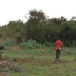 Anbau von Bohnen für die eigene Ernährung