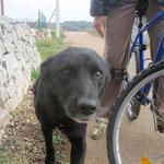 Richi, der Hundepapa (wir haben ihn nun so getauft)