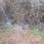 Gelöschte Brandstellen in der Brombeerhecke
