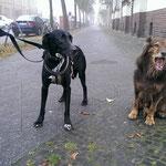 Jigen auf den Berliner Straßen mit seinem neuen Freund Balu