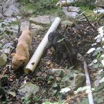 Zwei Hundekinder am Eingang zur Trullo-Ruine