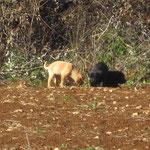 Zwei Hundekinder