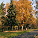 Осень на Мичуринском проспекте