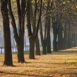 Осень на Мичуринском