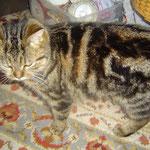 Hauskatzen von  Familie Weber