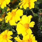 Желтые цветы. ВДНХ