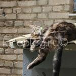 Ленивый кот. Москва.